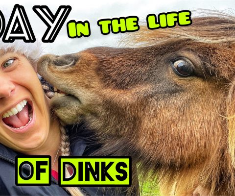 A DAY IN THE LIFE OF DINKS | Plus my Evening Routine with the Horses